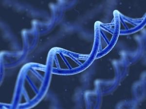 iStock_000009472190_DNA